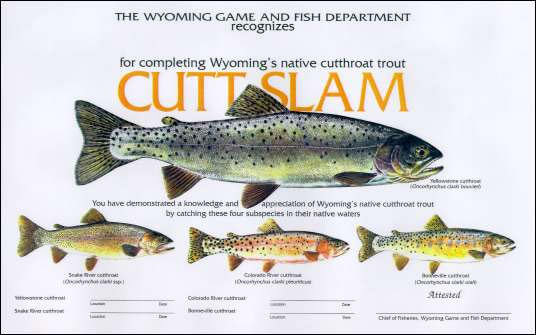 Two rivers emporium fly fishing outfitter wyoming for Wyo game and fish